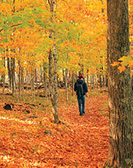 Outdoor fall hikes in Minnesota